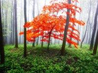 تصاویر رویایی از پاییز جنگل