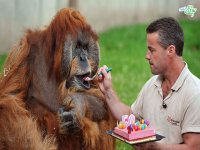 جشن تولد حیوانات