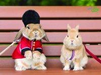 خوش تیپ ترین خرگوش دنیا