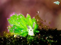 زیباترین موجود دریایی جهان