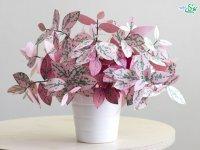گیاهان کاغذی