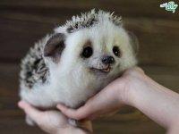 حیوانات زیبای پشمی