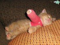شکستگی در حیوانات