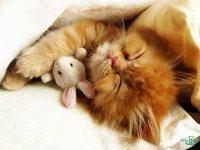 خواب شیرین عروسکی