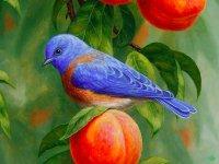 نقاشی های زیبا از پرندگان