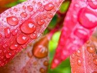 شور زندگی در قطره های باران