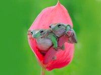 عشق و محبت در حیوانات