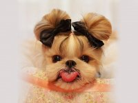 عکس های دیدنی از سگ های بامزه