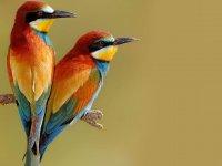 عکس های دیدنی از پرنده های کوچک