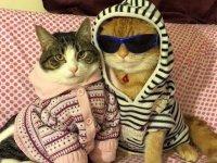 تصاویر جالب از گربه ها