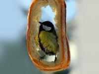 آشیانه ای برای پرنده ها