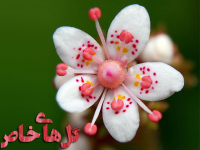 گل های خاص