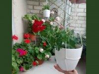 آویز گلدان