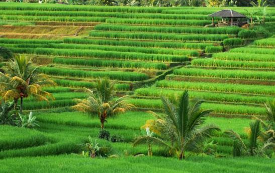 برنامه سفر 5 روزه به بالی و مالدیو و آشنایی با ستون تراجان در ایتالیا