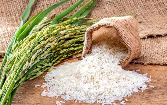سیرتا پیاز برنج
