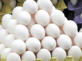 گرانی مجدد تخم مرغ