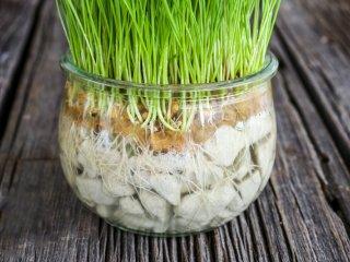 درست کردن سبزه عید در تنگ شیشهای