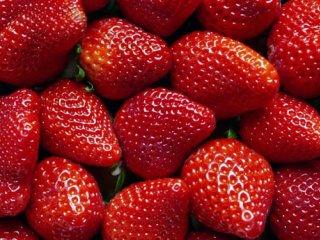 سلولهای سرطانی در تور میوهها