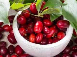 با این میوه ها به جنگ چاقی بروید
