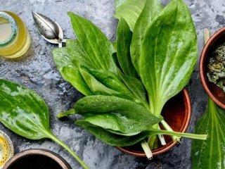 آیا یبوست را میشود با گیاهان دارویی درمان کرد؟