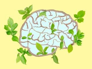 راهکار طب سنتی برای تقویت حافظه