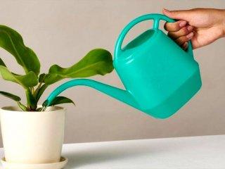 توصیههای مهم در نگهداری از گیاهان