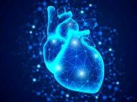 چرا مردان ۱۰ سال زودتر از زنان مبتلا به بیماری قلبی میشوند؟