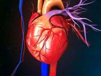 ترفندهایی برای درمان گرفتگی قلب و عروق