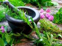 سلطان گیاهان دارویی را بیشتر بشناسید
