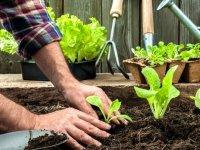 طرز تهیه کود خانگی برای گیاهان آپارتمانی
