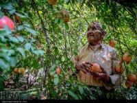زیبایی های روستای ژیوار در کردستان