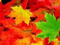 با استفاده از این رنگ ها در دکوراسیون پاییز را به خانه بیاورید