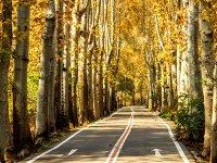 بهترین مناطق تهران برای پیاده روی پاییزی