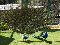باغ پرندگان تهران؛ تماشای هزاران پرنده در پایتخت