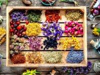 ۸ گیاهی که حکم مُسکن را دارند