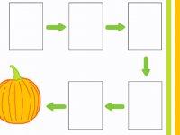 مراحل رشد کدو حلوایی