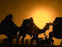 ۵ دلیل همراهی زنان با امام حسین (ع) در عاشورا