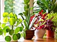 روش تهیه کود ارگانیک برای گیاهان آپارتمانی
