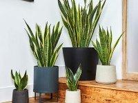 آشنایی با گیاهان آپارتمانی مقاوم به سرما