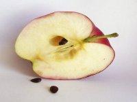 اثر معجزهآسای خوردن هسته سیب