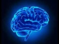 ۷ کاری که نمیدانستید مغز را تغییر میدهد