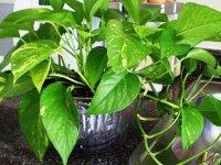 ۲۰ گیاهی که سموم هوا را از بین میبرند