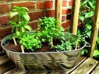 پرورش 10 گیاه دارویی در منزل