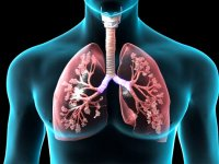 حفظ سلامت ریه و درمان بیماریهای ریوی از دیدگاه طب سنتی ایرانی