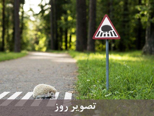 علائم راهنمایی برای حیوانات