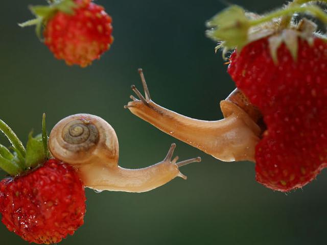دنياي شگفت انگیز حلزون ها