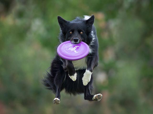 عکس های خنده دار و جالب از شیرین کاری سگ ها