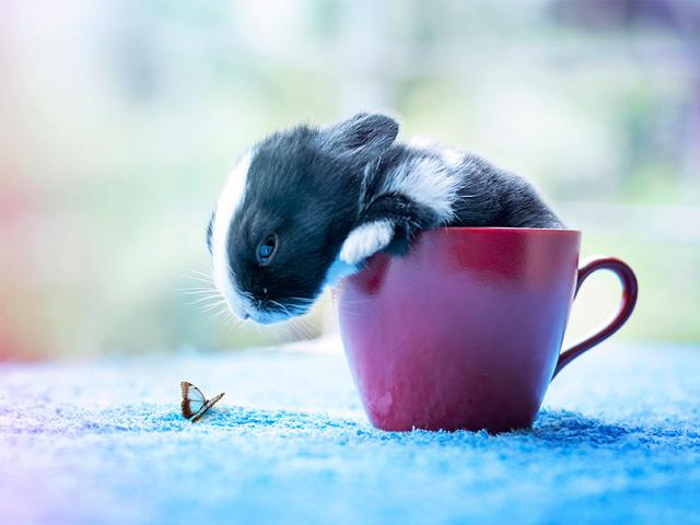 رشد بچه خرگوش