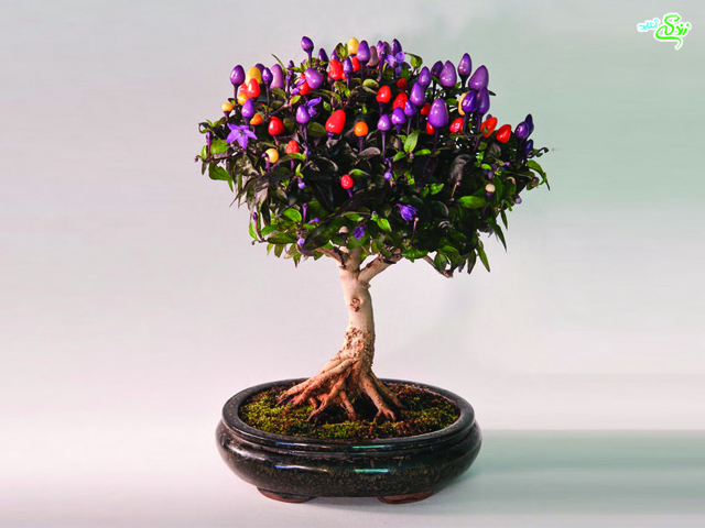 هیجان انگیزترین درختان مینیاتوری