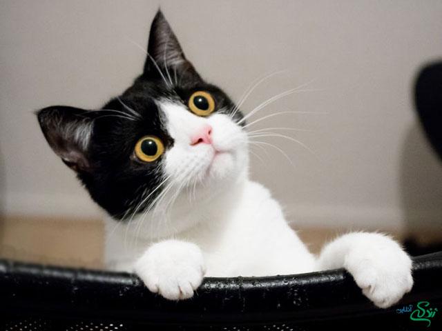 گربه بامزه